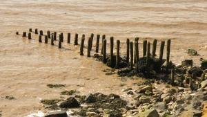 Remnants of putcher fishing