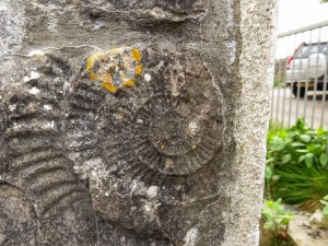 Ammonite at Hillhead