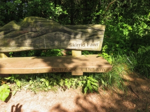 bench at base of the hill