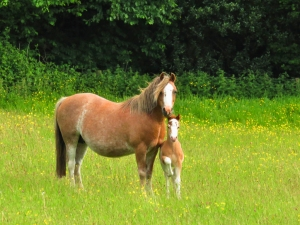 mare and her foal