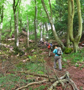 Climbing up through the beechwood