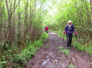 Muddy paths thru Coed Trecastell
