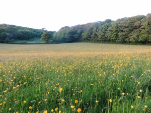 Buttercup meadows Garnhill