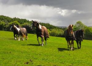 Horses near Garth Uchaf Farm
