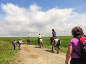 Three horses on ridge