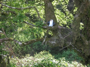 Penguin in tree