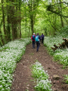 Northill Wood
