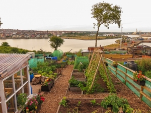 Allotments Dyfrig Street