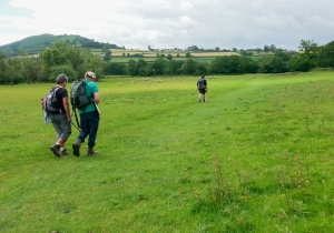 Setting off through meadows
