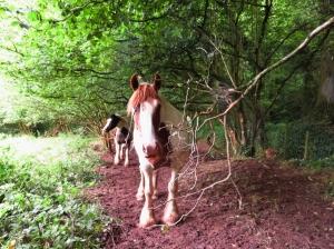 Piebald horses The Lawns