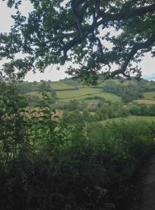 Towards Garway Hill