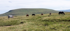Mountain ponies near Craig cerrig-gleisiad