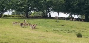 Foot path through deer farm