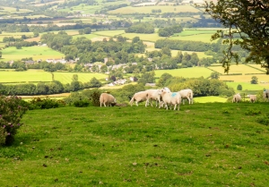 Overlooking Llanfrynach