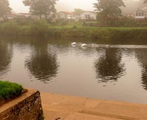 Swans near rowing club