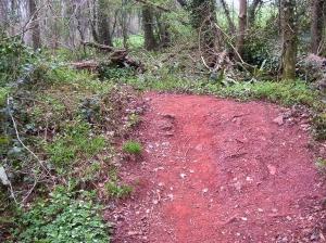 Iron rich soil Minepit Wood