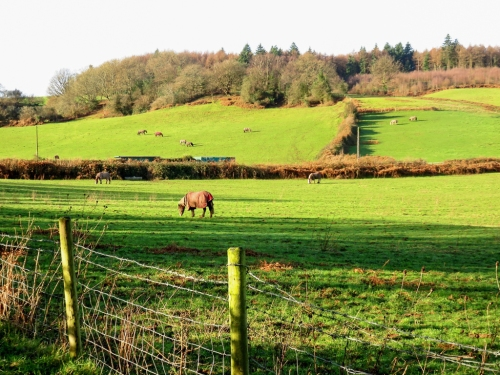 Sirhowy Valley Walk and horses
