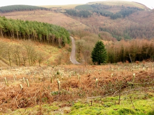 Overlooking Cwmcarn Forest