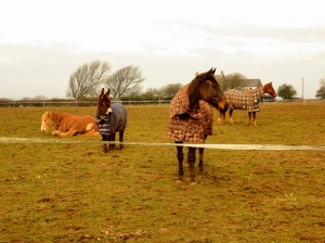 Three horses and a donkey