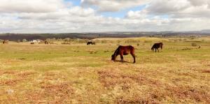 Horses Gelligaer Common
