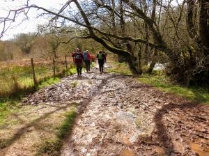 Muddy tracks on way to Sgwd Clun-gwyn