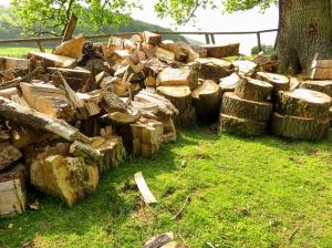 Wood at Lower Pen y graig