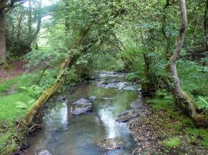 Lower Clydach River
