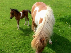 Mare and new foal