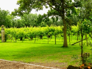 St Augustine's Vineyard