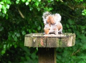 Pretty young squirrel