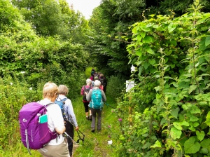 Down towards Cwm Ivy Woods