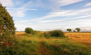 Grassy bridlepath