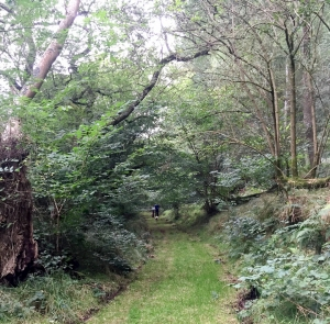 track near old lead mine