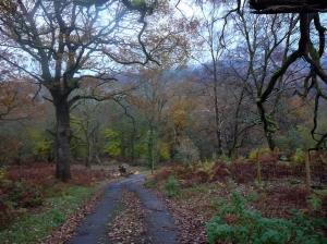 cwmpennar woods