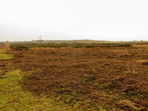 gorse clearing ogmore down