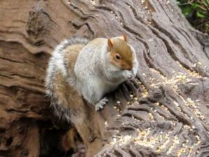 squirrel at cosmeston
