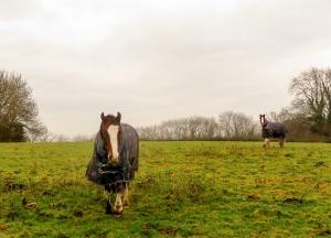 horses on st andrews ridgeway