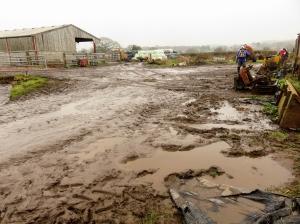 muddy farmyard
