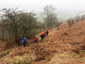 descending through the bracken