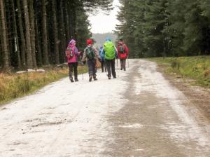 margan forest on snowy tracks