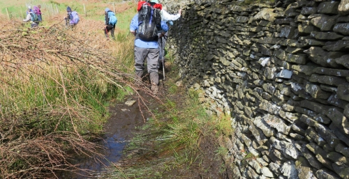 Boggy bits beside the drystone wall