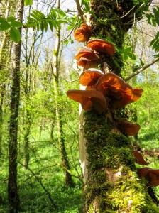 Fungi at Coed y Bwl