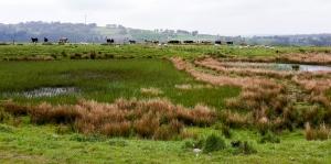 Ponds and animals Hafod y dafal
