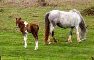 Foal Hatterrall Hill