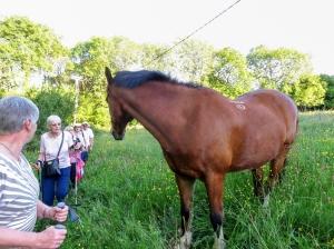 Horse in Wenvoe Orchid Field