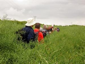 Splott Farm oilseed rape