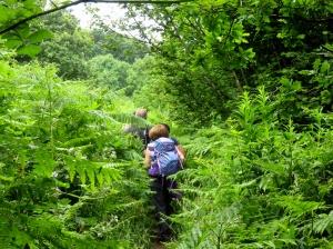Pettingale Wood