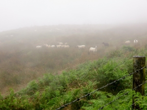 Sheep in the gloom