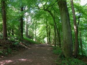 Returning through Highmeadow Woods