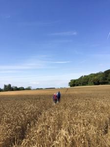 Back through wheat fields
